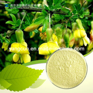Natural Extract 98% Genistein pictures & photos