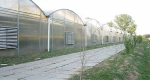 Wind Resistance Modular Design Garden Polycarbonate Sheet Greenhouse pictures & photos