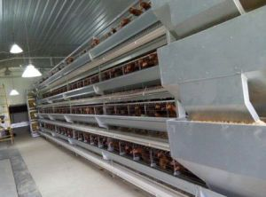 Prefabricated Low Cost Automatic Chicken Farm Layer Cage pictures & photos