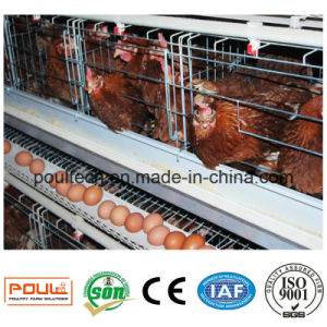 Hot-DIP Galvanized Poultry Farm Layer Chicken Cage pictures & photos