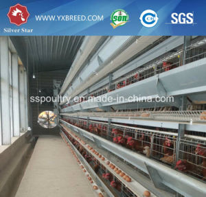 Poultry Farm H Type Layer Chicken Cage for Sale pictures & photos