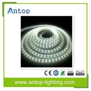 DC12V 60LEDs/M RGB LED Strip 5050 Flexible LED Strip pictures & photos