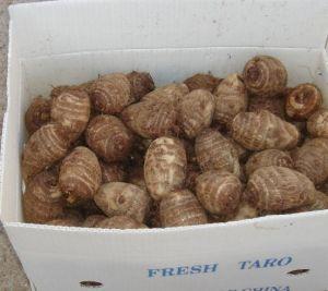 New Crop Fresh Taro pictures & photos