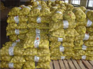 Golden Supplier in China Fresh Potato (100-200g) pictures & photos