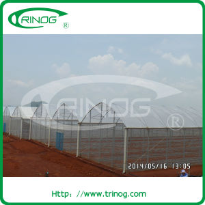 150micro film galve steel greenhouse for vegetable pictures & photos
