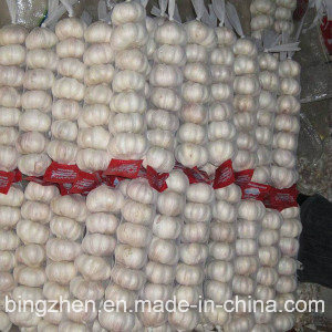 2017 New Crop Fresh Hybridization Garlic in Carton pictures & photos
