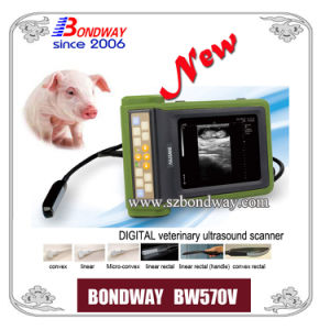 Swine Ultrasound for Imaging Pig, Goat, Sheep, Dog, etc Bw570V pictures & photos