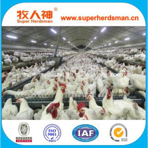 Full Set Automatic Poultry Farming Equipment for Breeder Chicken pictures & photos
