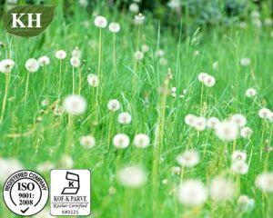 100% Natural Dandelion Extract: Flavones 5%UV-Vis pictures & photos