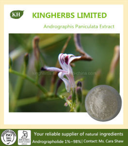 Andrographis Paniculata Extract Andrographolide 1%~98% pictures & photos