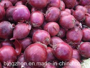 2017 New Crop Fresh Red Onion (5 cm and up) pictures & photos