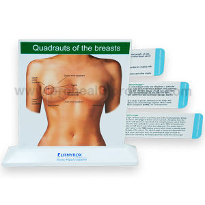 Breast Anatomic Education Model With Pull Out Cards pictures & photos