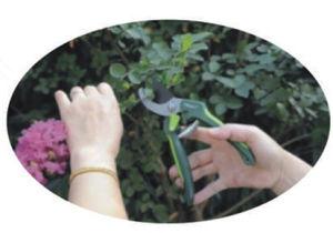 """7"""" Garden Scissors Garden Pruners Pruning Shears Bypass Secateurs pictures & photos"""