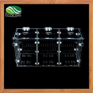 Transparent Acrylic Fish Tank Three Compartment Aquariums Isolation Box Tiddler Isolated Box Aquarium Tank pictures & photos