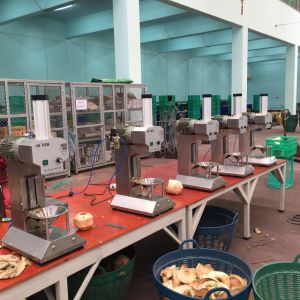 Automatic Coconut Peeling Machine Cax-3 pictures & photos