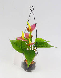 Amazing Handmade Hyacinth Plants with Hanging in Milk Bottle