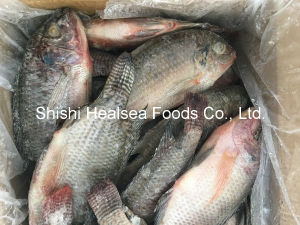 300/500g Whole Round Frozen Tilapia for African Market pictures & photos