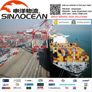 Fast Ocean Shipping Service From Ningbo/Shanghai to France