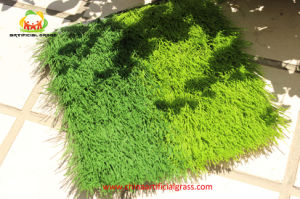 Global Standard Artificial Turf Grass Test by Labosport From Qingdao Meijia Plastic Industry pictures & photos