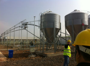 Layer Raising Equipments with Chicken House pictures & photos