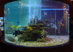 China Custom Acrylic Fish Tank Aquarium China Acrylic