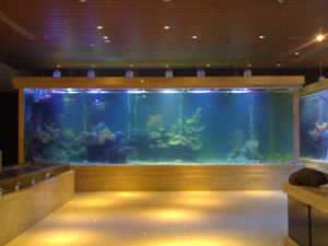 Well-Received Plexiglass Fish Tank Mr382 pictures & photos