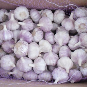 Fresh New Crop Normal White Garlic for Brazil Market pictures & photos