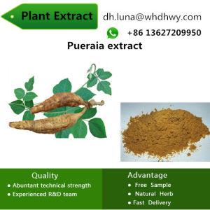 Plant Female Supplement and Estrogens Pueraia Isoflavones pictures & photos
