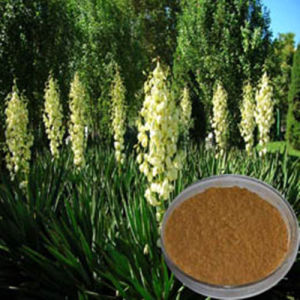 Natural Yucca Extract (30%-60% Saponins) pictures & photos