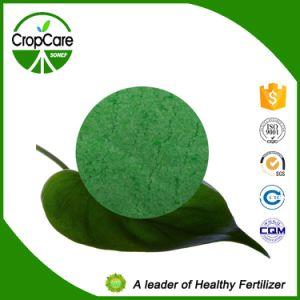 China Organic Compound NPK Fertilizer in Fertilizer pictures & photos
