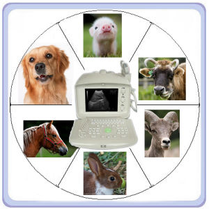 Ma21355 Portable Vet Ultrasound Machines pictures & photos