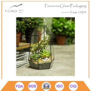 Irregular Succulent Geometric Glass Terrarium Wardian pictures & photos