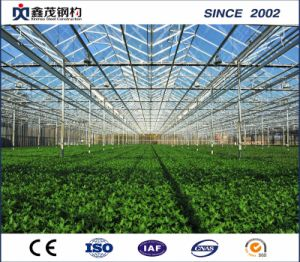 Agricultural Plastic Film Greenhouse for Vegetable and Tomato pictures & photos