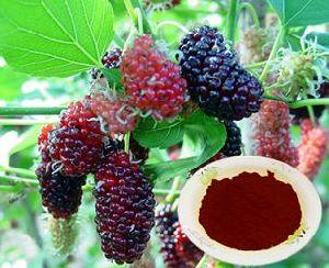 Mulberry Powder