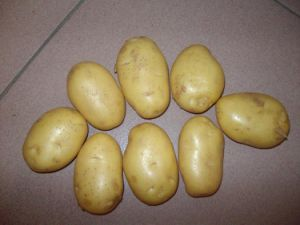 New Crop Fresh Holland Potato pictures & photos
