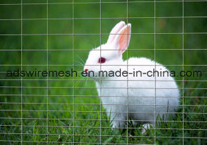 Rabbit Guard Fencing pictures & photos
