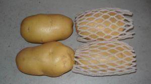 Fresh Potato - 2