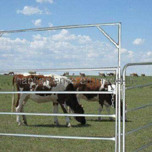 Horse Fencing pictures & photos