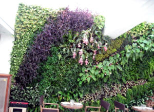Outdoor Use Artificial Plants Wall Green Wall pictures & photos