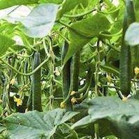 Amino Acid Potassium Agriculture Fertilizer pictures & photos
