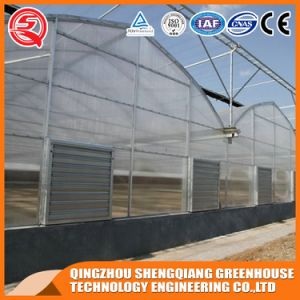 Agriculture Hydroponics Vegetable/ Flower PE Film Greenhouse pictures & photos