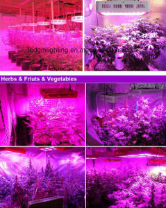 100W -110W LED Grow Light Saga Switchable Blue, White, Red Color LED Grow Light for Growbox & Greenhouse pictures & photos