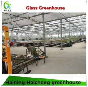 Venlo Type Glass Greenhouse for Mini Tomato Growing pictures & photos