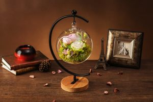 Promotion Preserved Flower for Decoration pictures & photos