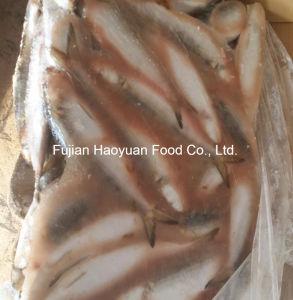 Aquatic Fish Chinese Frozen Sardine pictures & photos