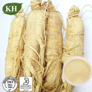 Low Pesticide Residues Ginseng Root Extract Ginsenosides 5%-80% pictures & photos