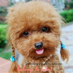 Fashion Pearl Dog/Cat necklace, Pet Gift pictures & photos