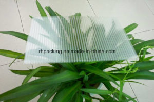 4′*8′ 1220mm*2440mm Transparent PP Corrugated Plastic Sheets PP Board Corflute Correx Coroplast for American and Japan Market pictures & photos