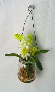 Beautiful Glass Jar Plants in Milk Bottle White Lily of The Valley pictures & photos