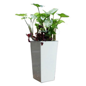White Ceramic Flower Pot for Outdoor pictures & photos